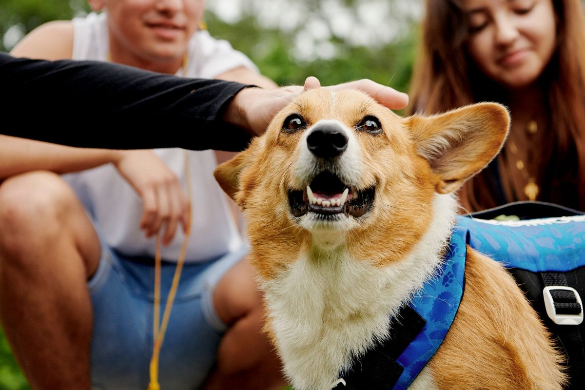 Italy discovers green and pet-friendly hospitality